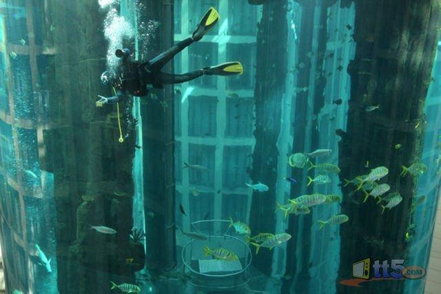 مصعد كهربائي داخل حوض مائي 981778331.jpg