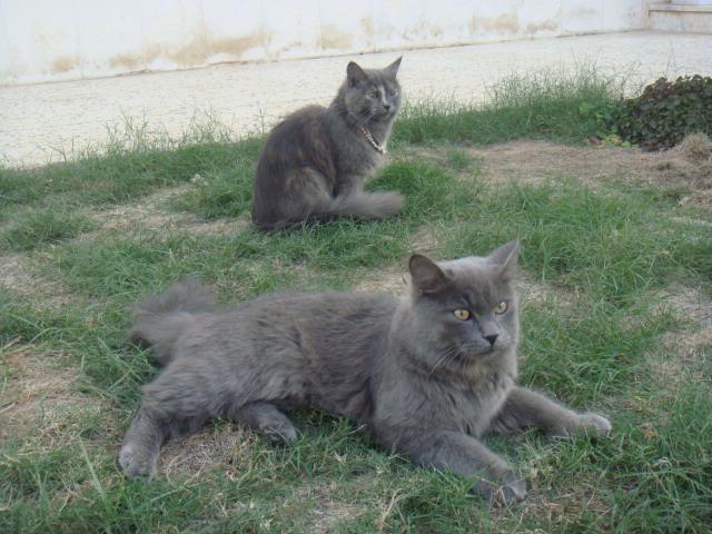 سوال وجواب عن القطط مع التوضيع بالصور  401432938