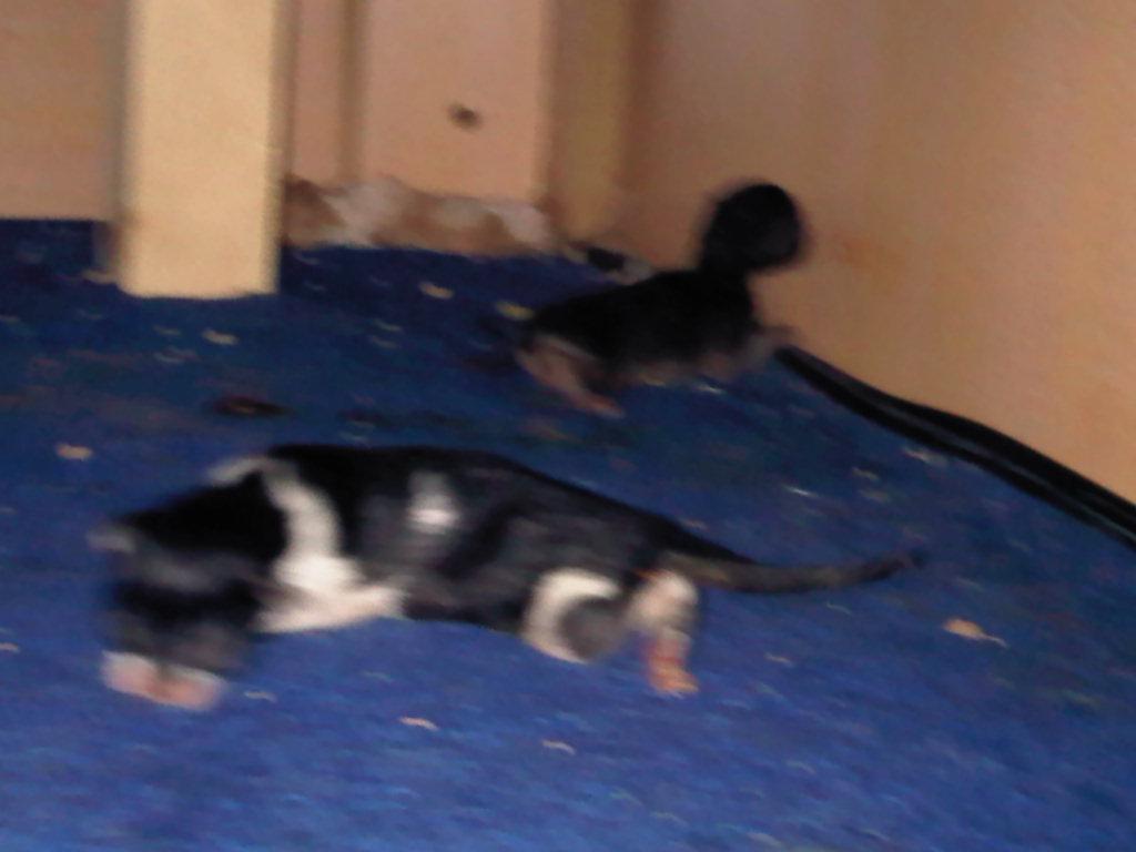 سوال وجواب عن القطط مع التوضيع بالصور  605146781