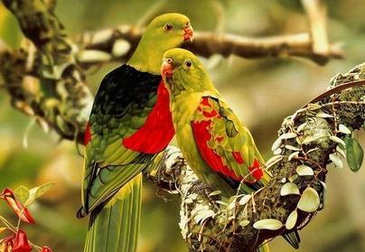 عصافير دروب العشق