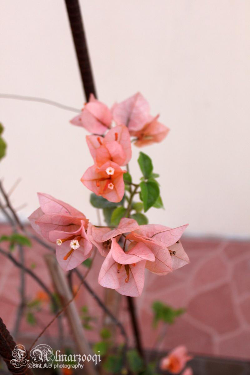 ���������������flowers����������(2) 393752398.jpg