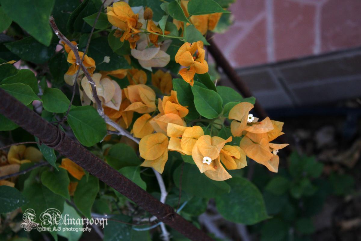 ���������������flowers����������(2) 452955476.jpg