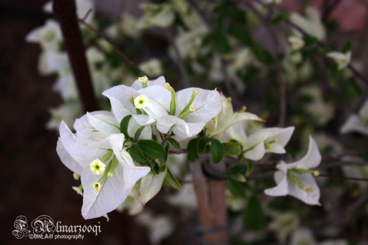 ���������������flowers����������(2) 694911026.jpg