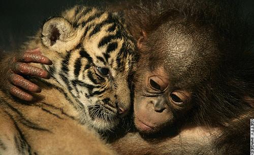 animals friendship