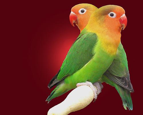 شدو الطيور 37/100