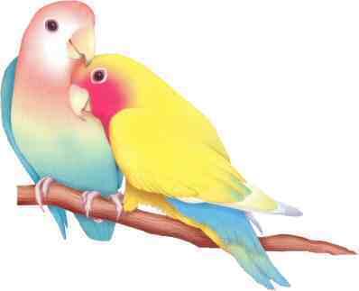 طيور الحب تصدق 769544431.jpg