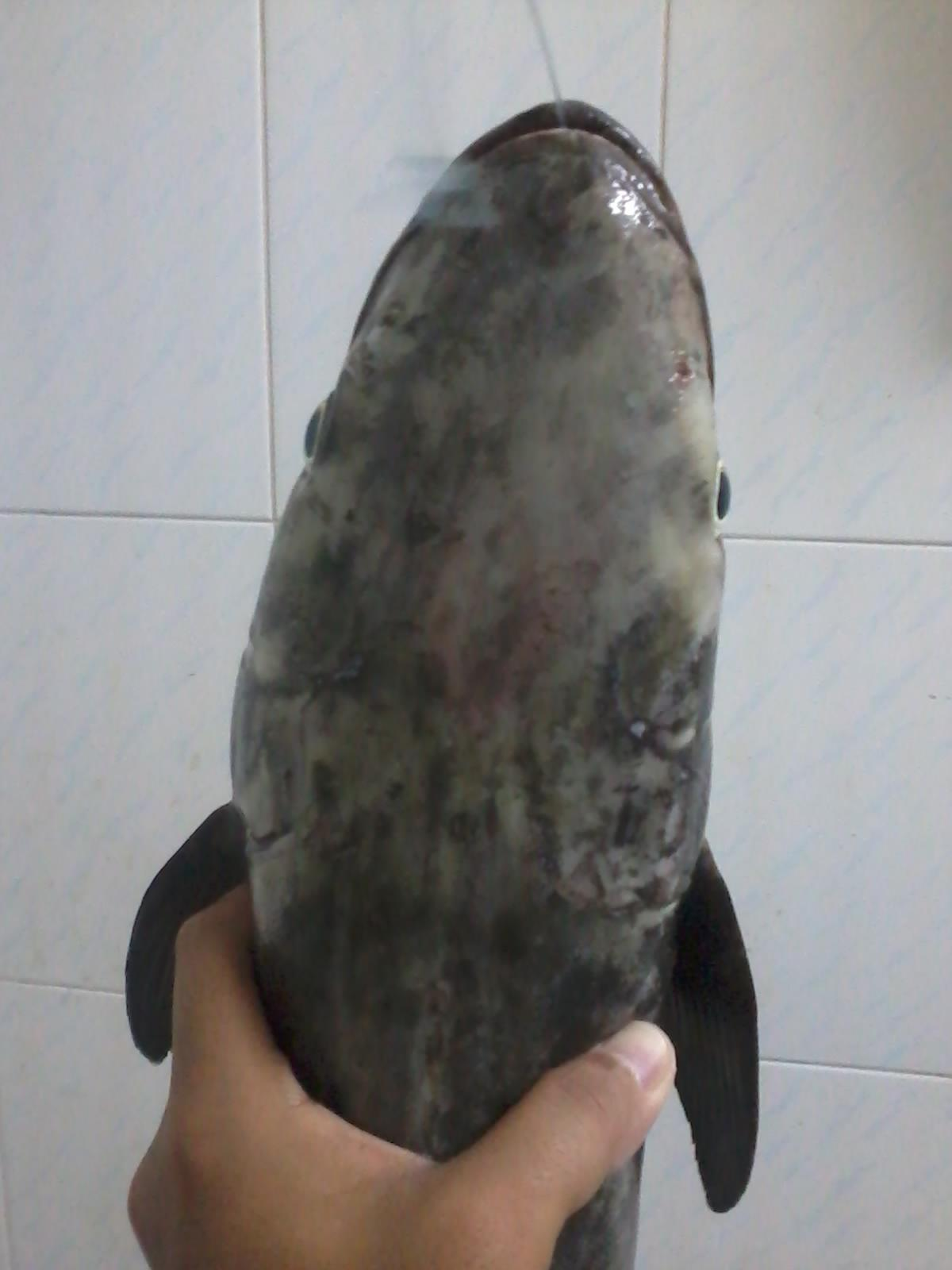 ما نوع هذه السمكة؟؟