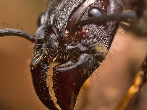 صور النمل بحجم اكبر 335826633