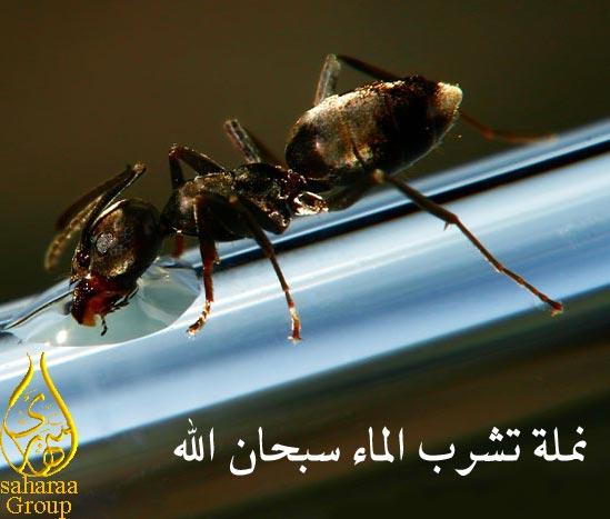 صور النمل بحجم اكبر 418107085