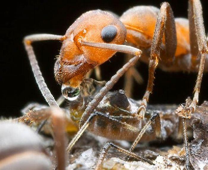 صور النمل بحجم اكبر 625355472