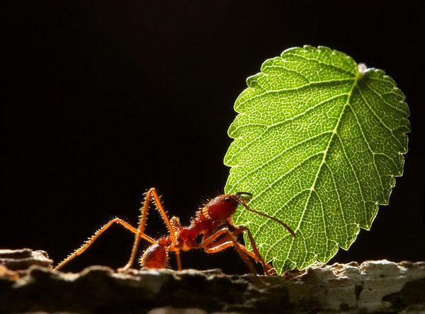 صور النمل بحجم اكبر 999601337