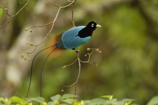 طيور لا يعلم بسرها إلا خالقها .....