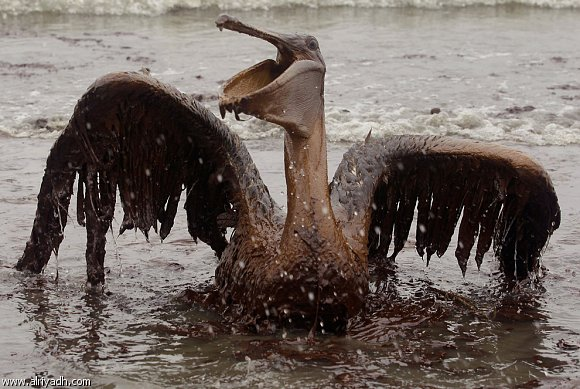 ماذا يحدث عندما يتسرب النفط ؟ [ صور ] 737621882
