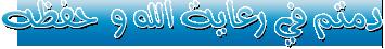 ▼ Internet Download Manager 6.18 Build ▼ ❶ عالميا,بوابة 2013 376632976.png