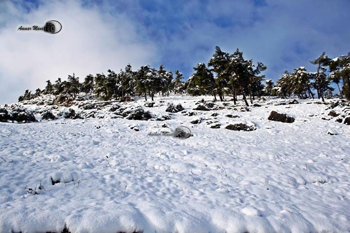 """نآبلس والثلوج 2013 """" 449481481.jpg"""