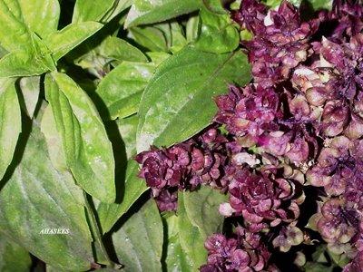 جمال الزهور 738522549.jpg
