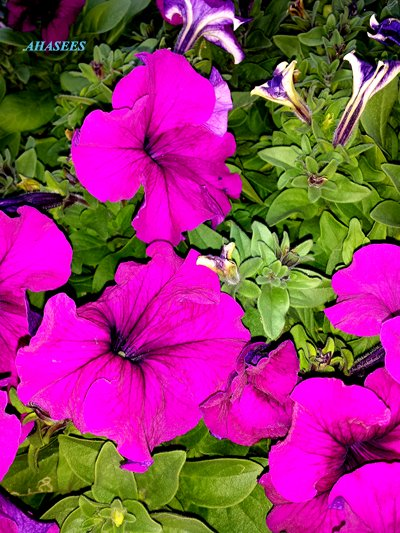 جمال الزهور 810622136.jpg