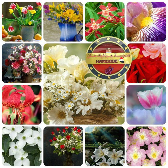كولكشن كبير من خلفيات الزهور لسطح المكتب , خلفيات زهور بكل الالوان والانواع لسطح المكتب والمصممين, كبير الحجم