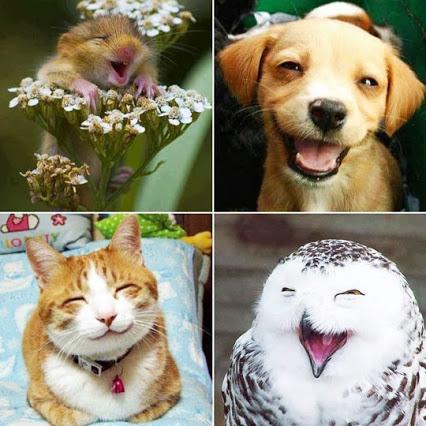 اروع ابتسمات حيونات