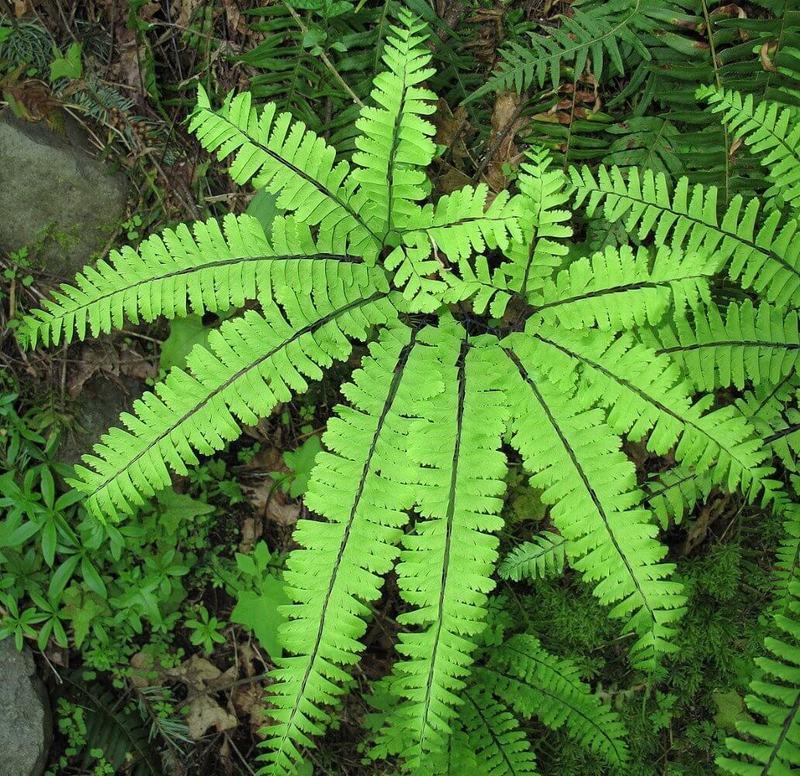 تعرف عن النباتات المنزلية التي لا تحتاج للشمس 354398778